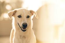 Mogę wykorzystać w artykule tę historię o zaginionym psie?