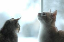 Rozmowa z kotkiem